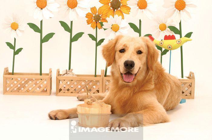 狗简笔画彩色