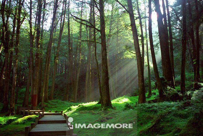 自然,森林,步道,