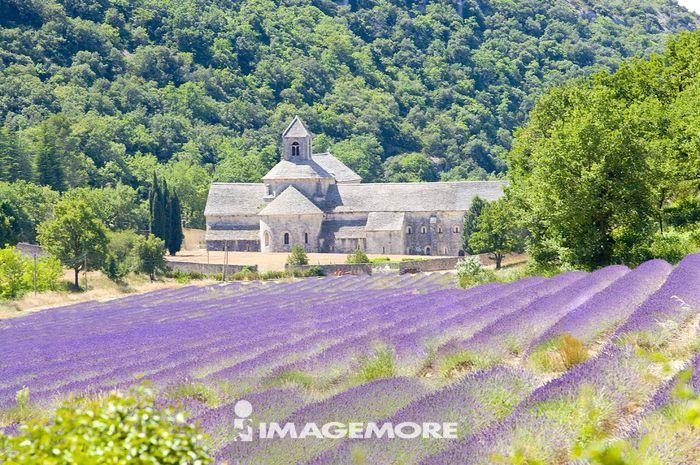 欧洲,法国,普罗旺斯,哥禾德,赛南克修道院,
