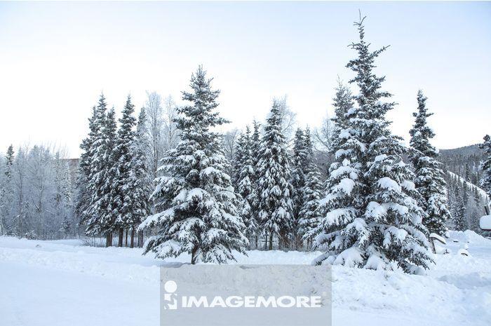 风景,冬天,森林,