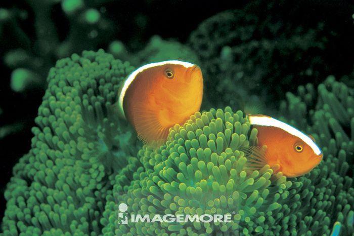 地图世界地图,微距,动物,鱼类,鱼,鱼群,水中生物,生物,海洋,水纹,水波