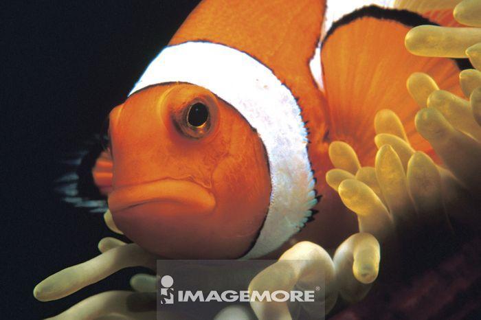 地图世界地图,微距,动物,鱼类,鱼,鱼群,水中生物,生物,海洋,水纹,水