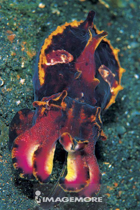 水,波纹,海底,水里,彩色,深海,生态,生态环境,自然生态,生物学,火焰