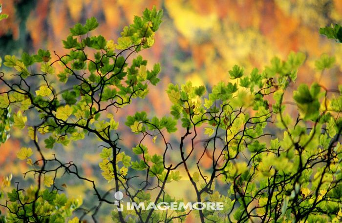 树木,树,森林,森林浴,丛林,树林,植物,树枝,树叶,叶子,叶,绿叶,树丛