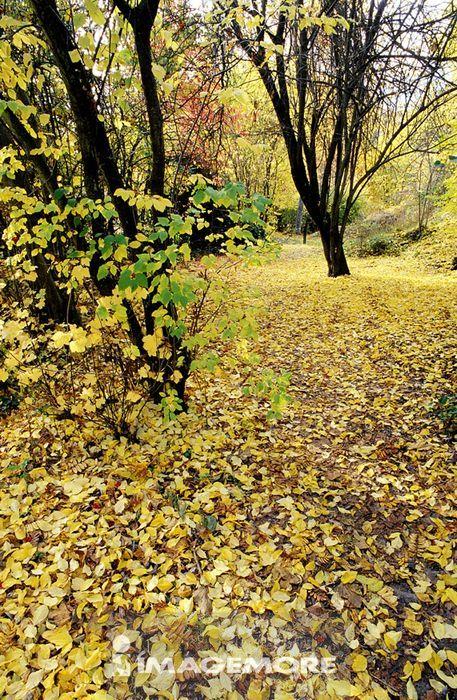 树,落叶,秋天