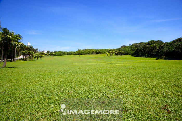 草地,草原,