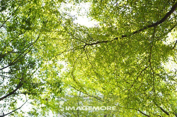 力量,天气,自然纹路,自然图案,高的,叶子,森林,树林,丛林,茂盛的树叶