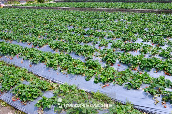 农作物.丰收