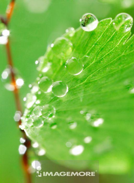 背景 壁纸 绿色 绿叶 设计 矢量 矢量图 树叶 素材 植物 桌面 367_500
