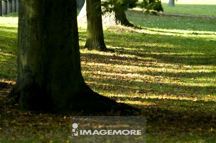 树,风景,