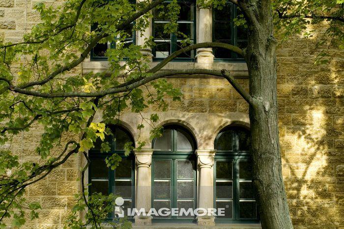 树,窗户 高清图 - imagemore上海富昱特创意图库,东方