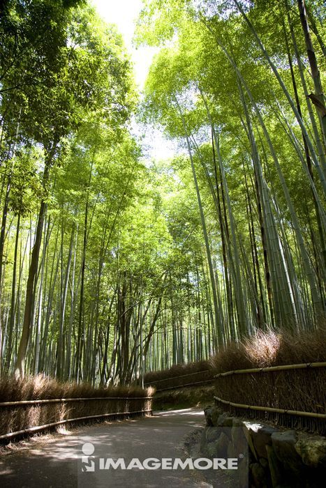 日本,亚洲,著名景点