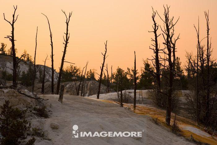 黄石公园,怀俄明州,美国,北美洲,