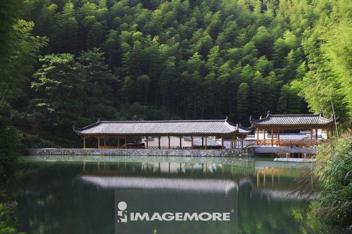中国,安徽省,木坑竹海,竹坑,黄山风景区,竹子