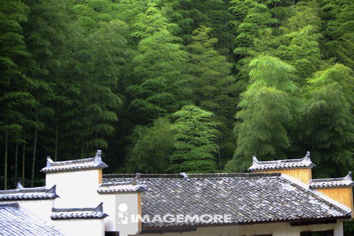 中国,安徽省,木坑竹海,竹坑,黄山风景区,竹子,屋顶