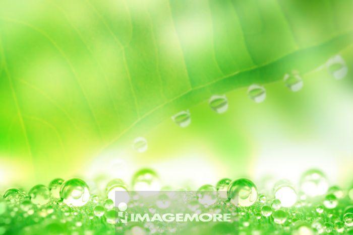 背景 壁纸 绿色 绿叶 设计 矢量 矢量图 树叶 素材 植物 桌面 499_333