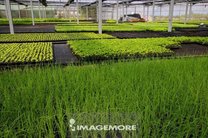 农作物,,温室