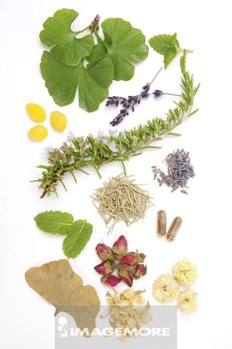 银杏叶,银杏果,薄荷,迷迭香,熏衣草,玫瑰,菊花,茉莉
