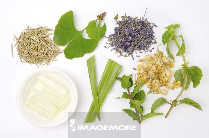 芦荟,银杏叶,薄荷,迷迭香,熏衣草,茉莉
