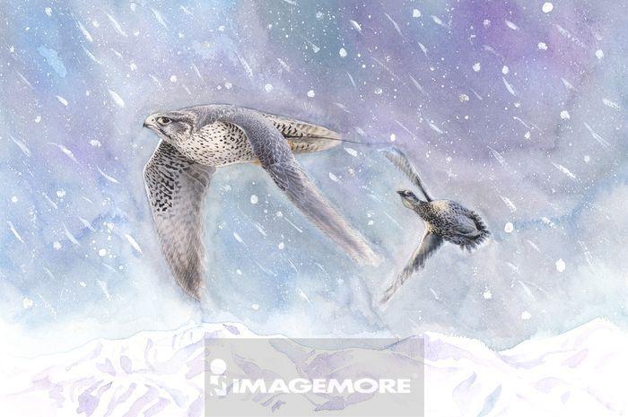 动物主题,水彩画,室外,横图,鸟,二只动物,冬天,雪,野生动物,展翅,飞行