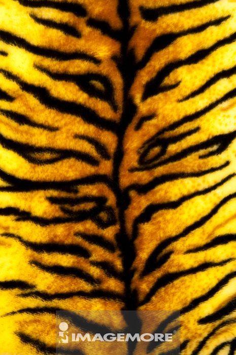 动物皮肤,纺织品,老虎皮
