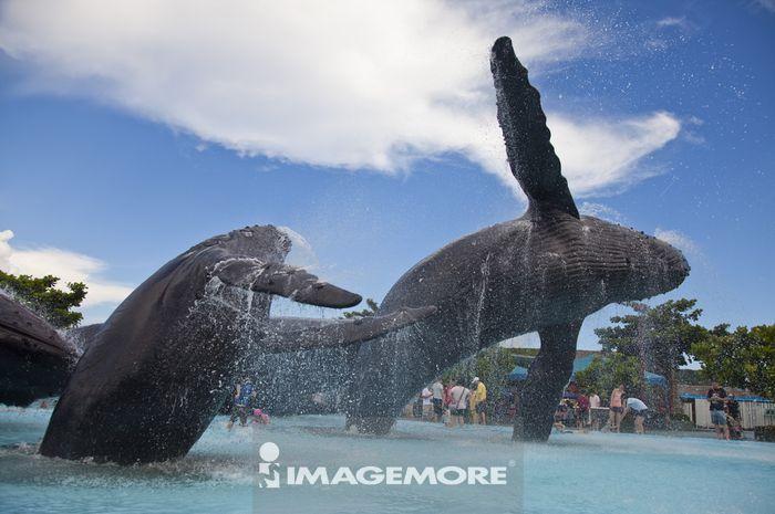 垦丁,屏东,台湾,亚洲,海洋生物博物馆,鲸鱼,