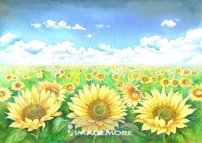 水彩画,向日葵,花,