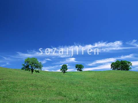 绿地天空风景