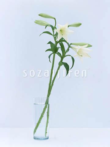 fd141,花的印象,花,花艺,花艺设计,插花,花道,百合