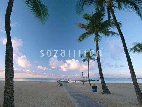 阳光,海岸,沿岸,岩岸,海边,沙岸,砂岸,沙滩,沙摊,海滩,沙滩,椰子树
