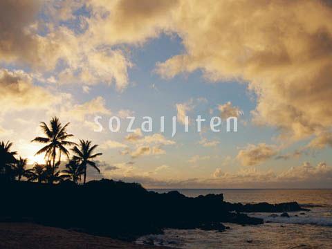夏威夷,海洋,海岸,沿岸,岩岸,海边,沙岸,砂岸,夕阳,椰子树,椰子棕榈树