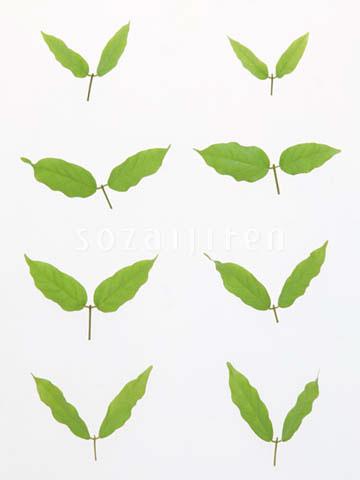背景 壁纸 绿色 绿叶 设计 矢量 矢量图 树叶 素材 植物 桌面 360_48