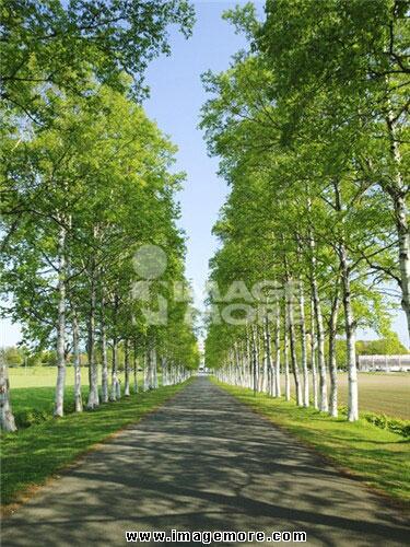 影像,摄影,风景,彩色,直图,垂直构图,竖图,自然,天空,蓝天,植物,树,路
