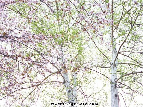 01d12030,jk200,仰视,影像,摄影,彩色,横图,水平构图,自然,森林