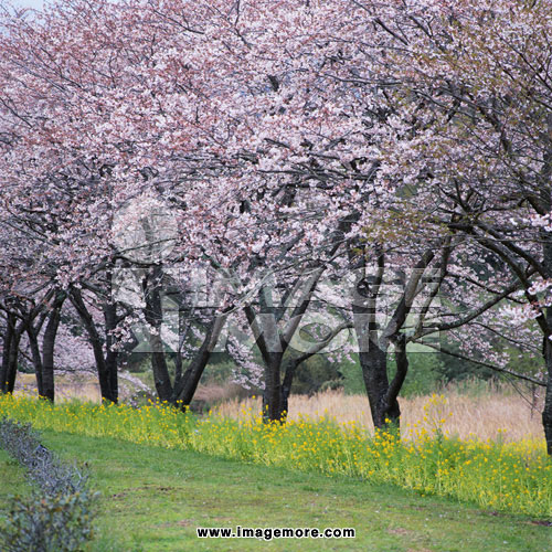 春天风景油画无水印