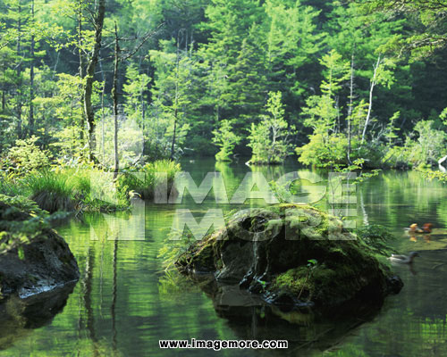 树林边的溪流