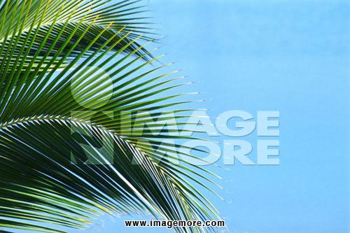 椰子树叶子的特写