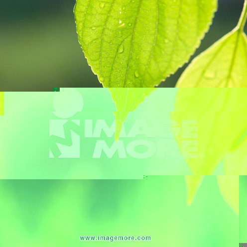 叶片,绿叶,树叶,叶子,叶,叶片,绿叶,树叶,绿色,水滴,水珠,水珠,露水