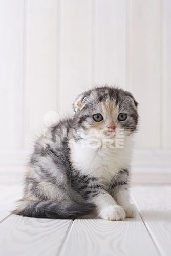 无水印可爱猫头像