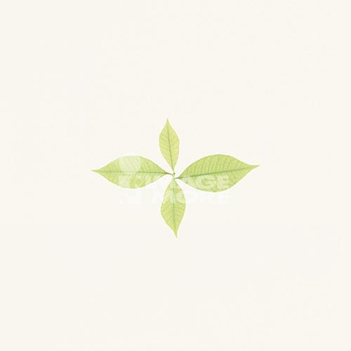 背景 壁纸 绿色 绿叶 设计 矢量 矢量图 树叶 素材 植物 桌面 500_50