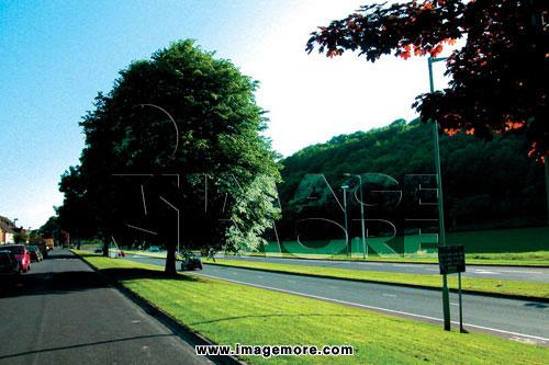 车道,树,草地