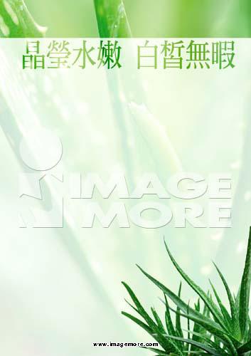 海报,植物,芦荟