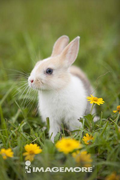 动物,兔子,小兔子,可爱