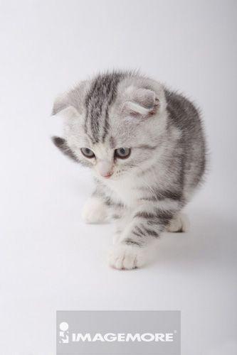 壁纸 动物 猫 猫咪 素描 小猫 桌面 333_500 竖版 竖屏 手机