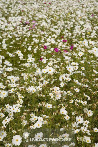 花,植物,自然美景,台湾,