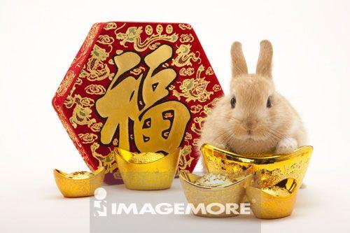 新年,兔子,福字,金元宝