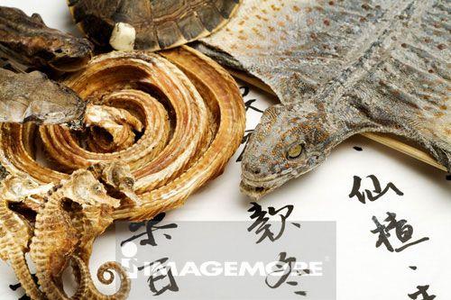 守宫,蛤蚧,蛇干,龟板,海马,壁虎,中药,