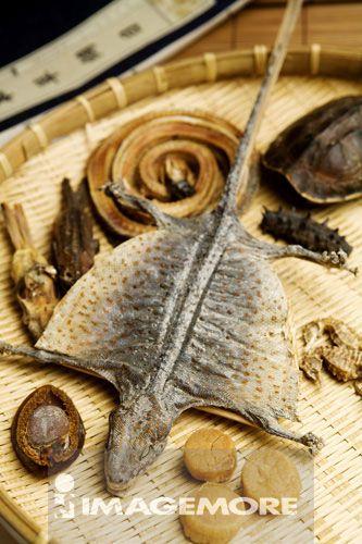 守宫,蛤蚧,壁虎,蛇,蛇干,刺参,龟壳,龟板,海马,干贝,鲍鱼,中药,南北干货,