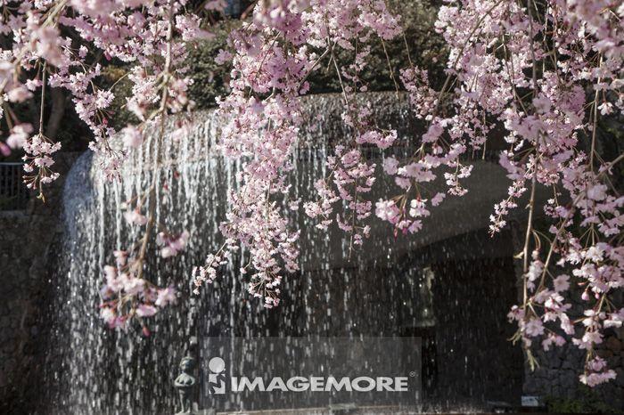 有马温泉,神户,兵库县,日本,亚洲,樱花,