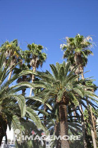 城市,棕榈树,拉斯韦加斯